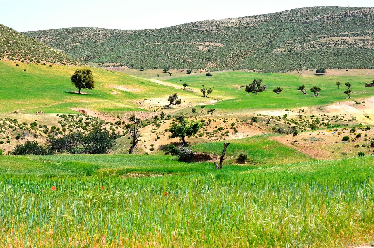 Spring Into Spring Spring Green Nature Beauty Grass Hugging A Tree Tree Great Morocco Louktou