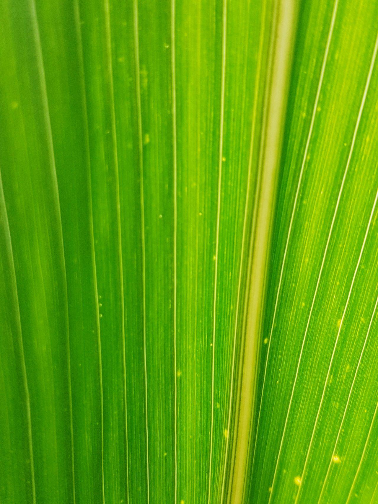 Mais Leaf Leafporn Corn