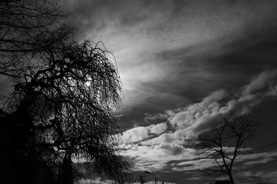 EyeEm Nature Lover Blackandwhite Sky Nature