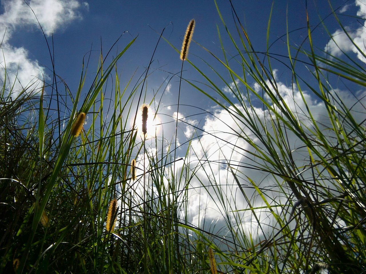 seeing the world from the under Grass And Sky Under Meadow Meadowlands People And Places. People And Places People And Places