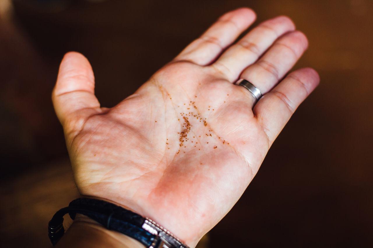 Cigar Close-up Cuban Cigar Human Body Part Human Finger Human Hand One Person Real People Seed Tobacco Tobacco Barn Tobacco Seed