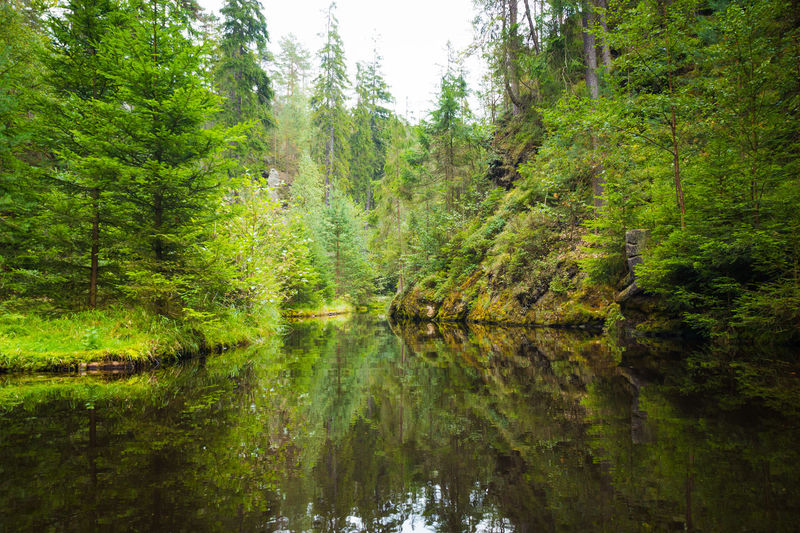 Adršpach Adršpachské Skály Beauty In Nature Day Forest Green Color Growth Lake Mountain Nature No People Outdoors Reflection Rock - Object Scenics Sky Tranquil Scene Tranquility Tree Water Waterfront