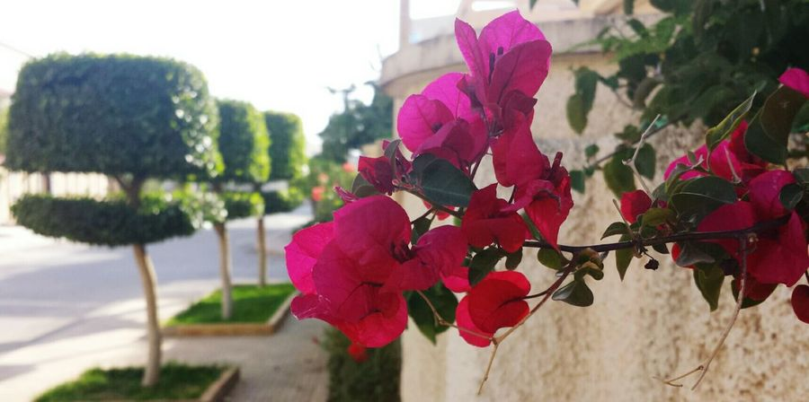 Flowers Nature Spring Beauty Oujda Morocco