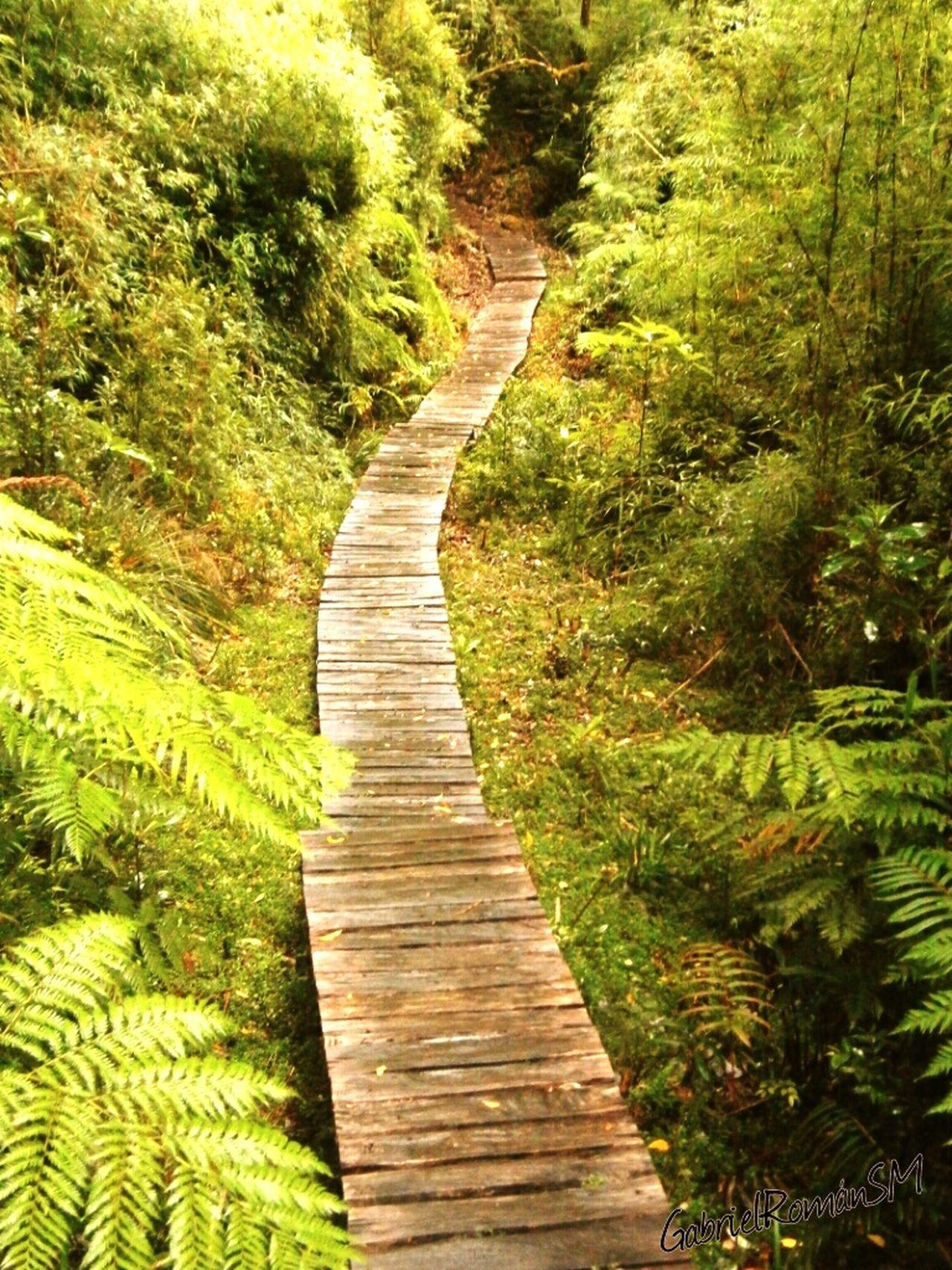 Sendero Cascadas Parque Pumalin Carretera Austral Patagonia Chilena Pasarela Hacia La Vida Helechos Naturaleza Maravillosa Enjoying Life Mochileando