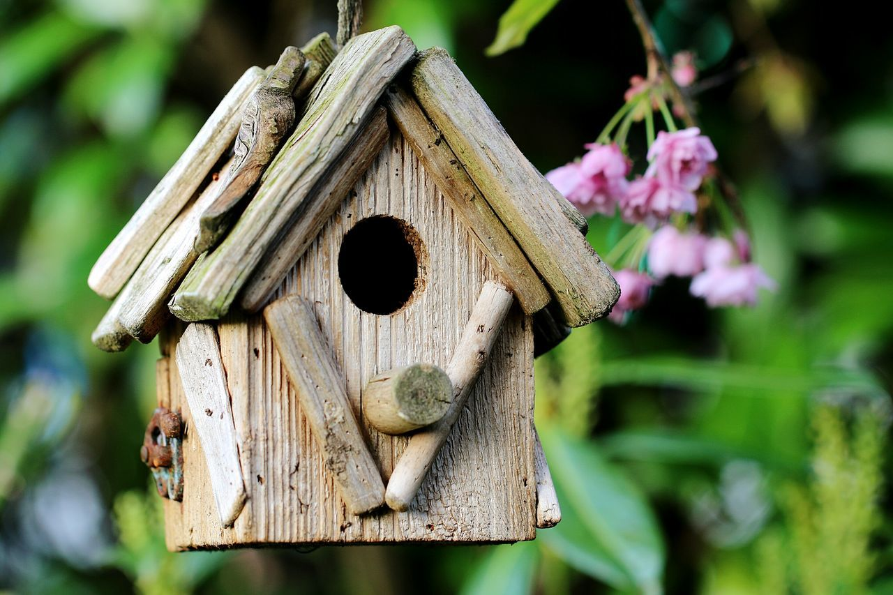 Focus On Foreground No People Close-up Outdoors Day Nature Birds House My Home Is My Castle Tree Art And Craft Wood - Material Wooden Bird House My Garden Premium Collection Premium