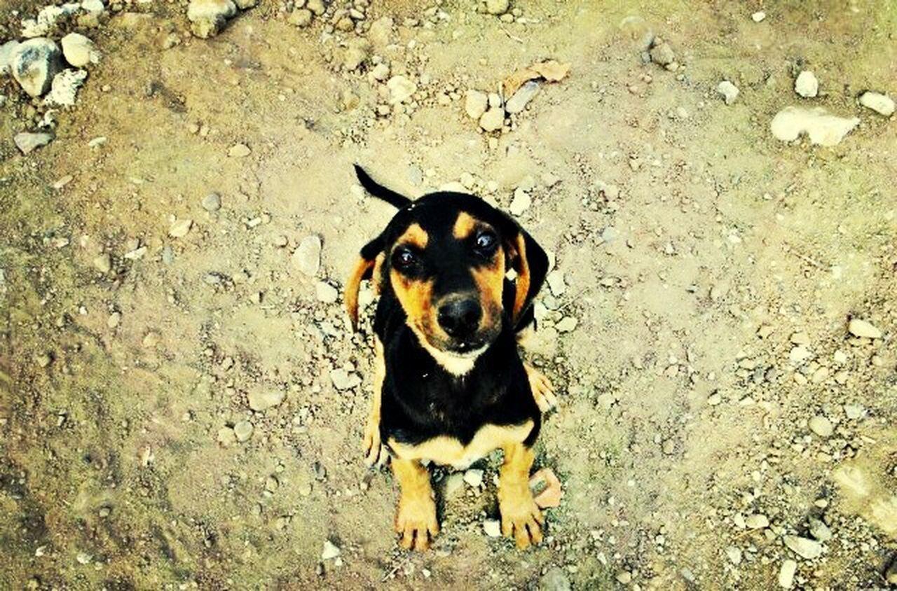 Little happy dog! Animal Happiness