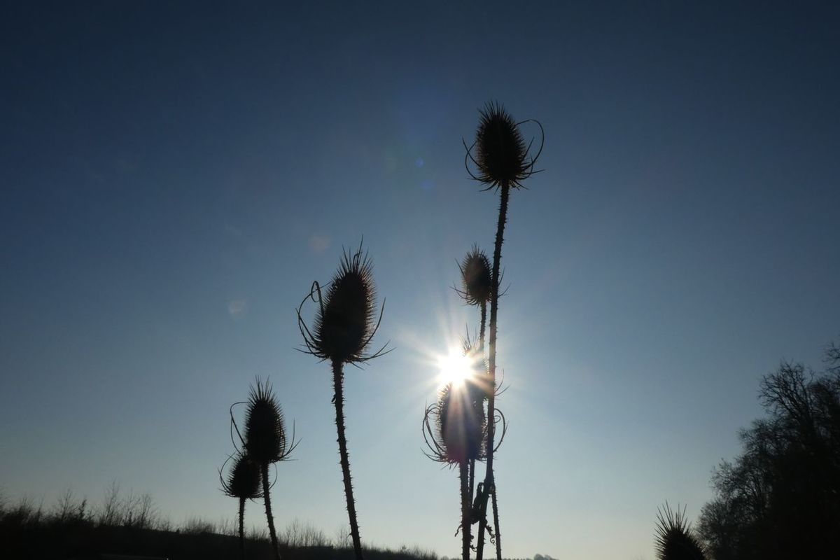 Low Angle View Sky Tree Silhouette No People Nature Outdoors Tranquility Tranquil Scene Scenics Beauty In Nature Thistle Day Teasle Welcome To Black