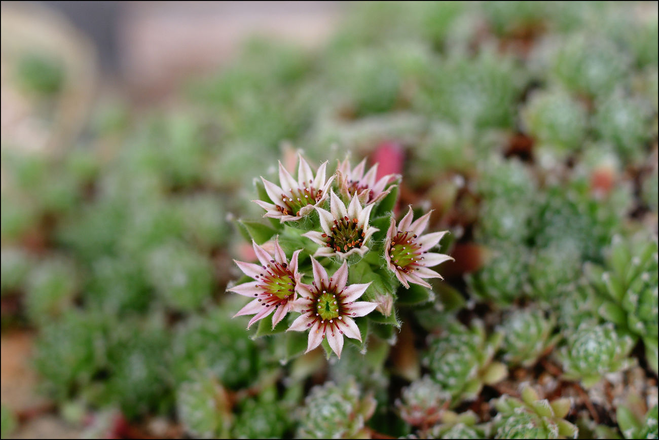 진주 남해 여름휴가 중 일장춘몽이네 앞마당 Flowers EyeEm Nature Lover A700