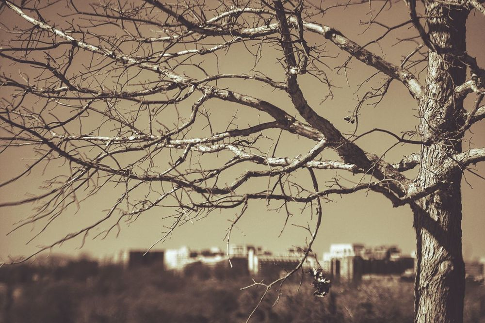 Overseer Trees Tree Branches Tree Branches Cityscapes Cityscape Sepia Sepia_collection Blackandwhite Black And White
