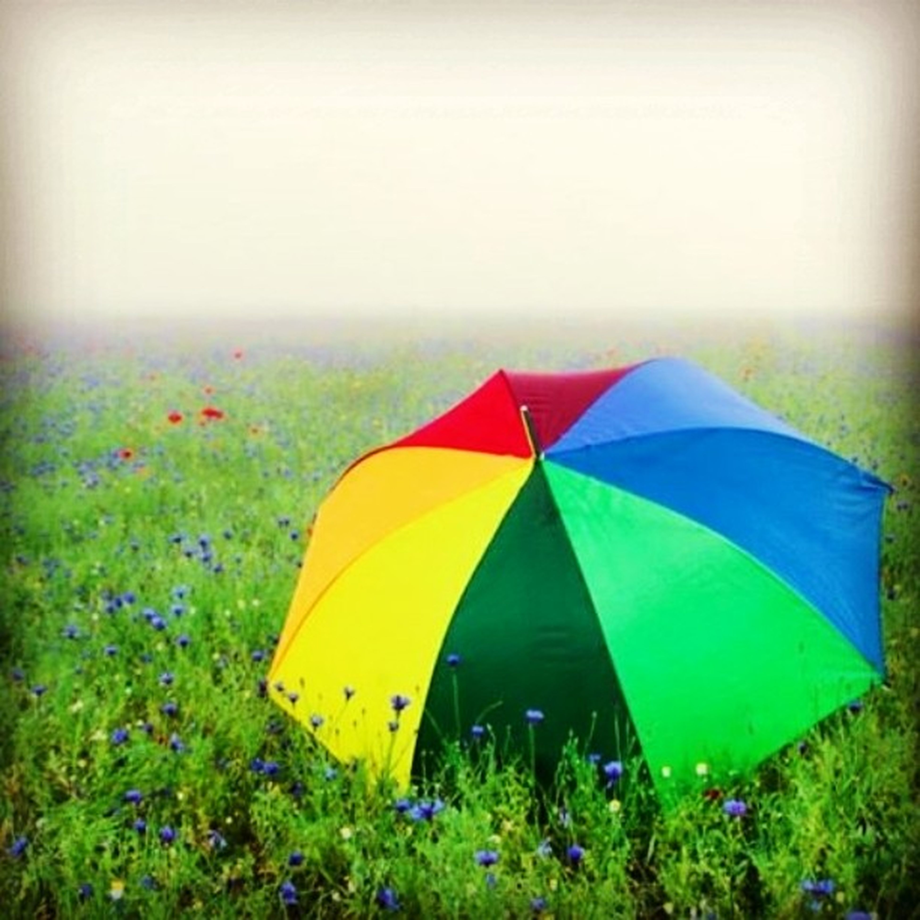 grass, yellow, multi colored, green color, blue, field, umbrella, clear sky, day, grassy, nature, tranquility, outdoors, beauty in nature, green, no people, colorful, landscape, protection, close-up