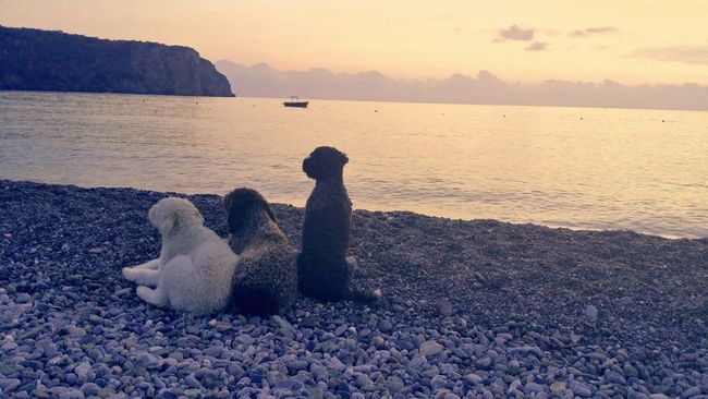 My dogs Watching The Sunset Last Day To The Sea Best Friends Best Moments Togetherness