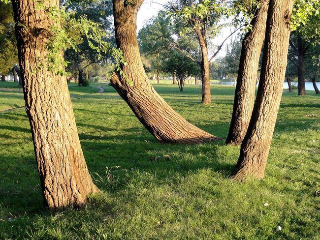 Taking Photos Trees