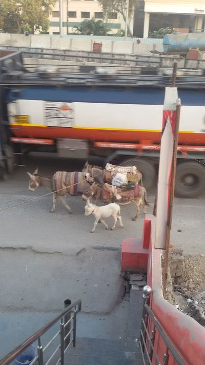 Family Time Baby Beast Of Burden Cute Baby Donkey Time Lovely Family Natural Beauty White Beauty
