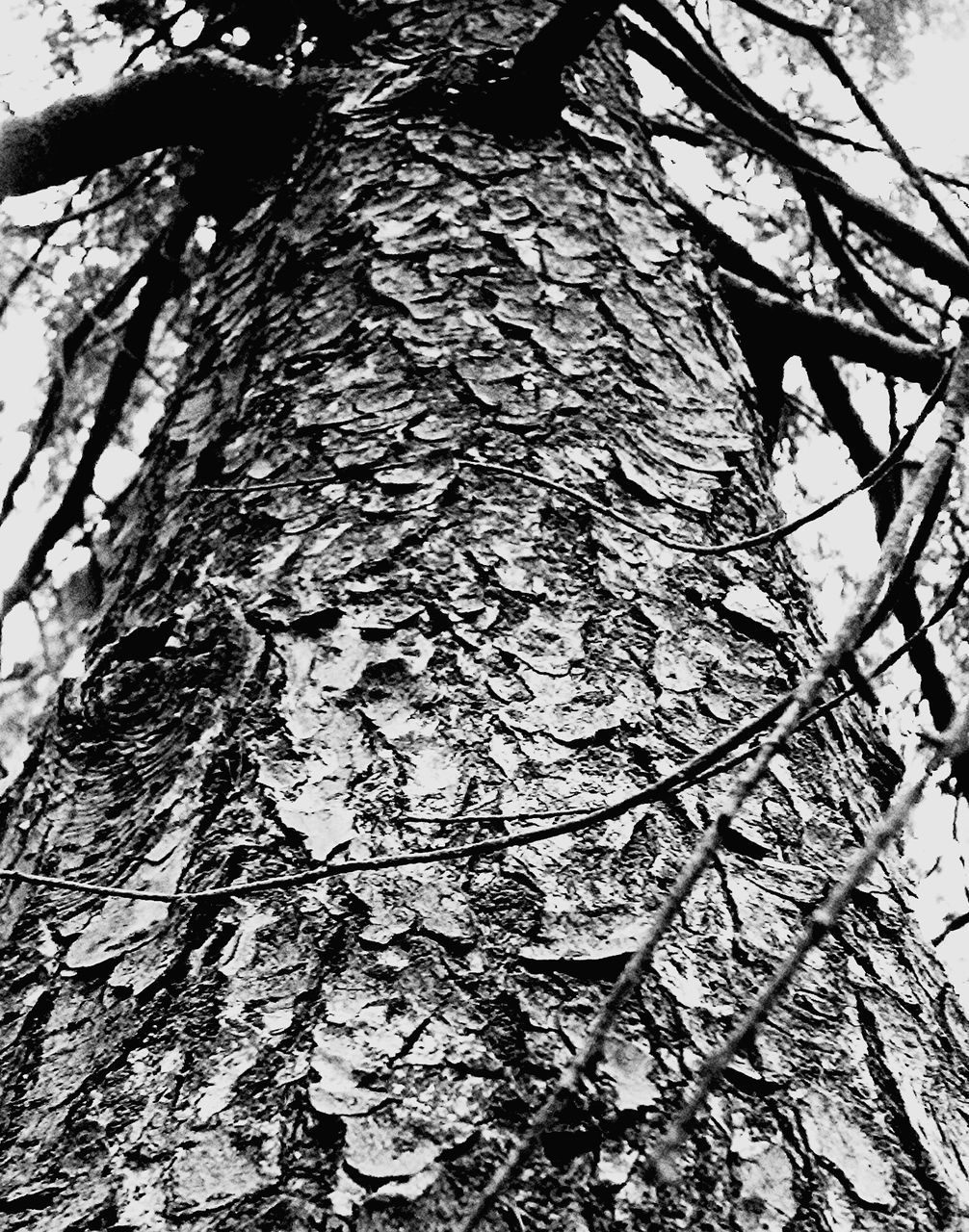 tree, tree trunk, branch, low angle view, nature, day, growth, bark, outdoors, no people, textured, beauty in nature, close-up, fragility, sky