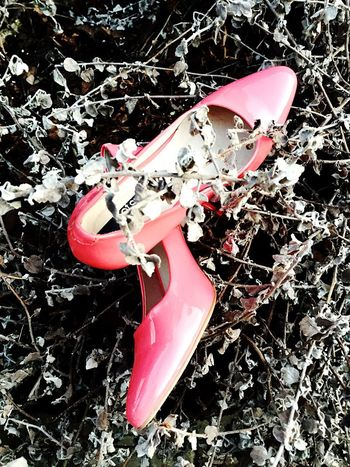 Millennial Pink Red Pink Color Outdoors No People Day Nature Close-up High Angle View Pink Shoes Shoes Of The Day Garden Plant Growth High Hill High Hills