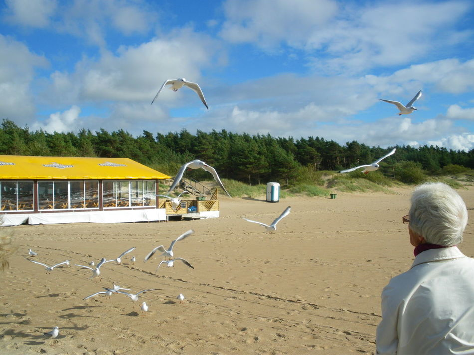 Beach Bird Flock Of Birds Flock Of Seagulls Flying Leisure Activity Lonely Beach Lonely Person Mid-air Old Person One Person Outdoors Sand Seagull Seagulls Sky And Clouds Spread Wings Unrecognizable Person