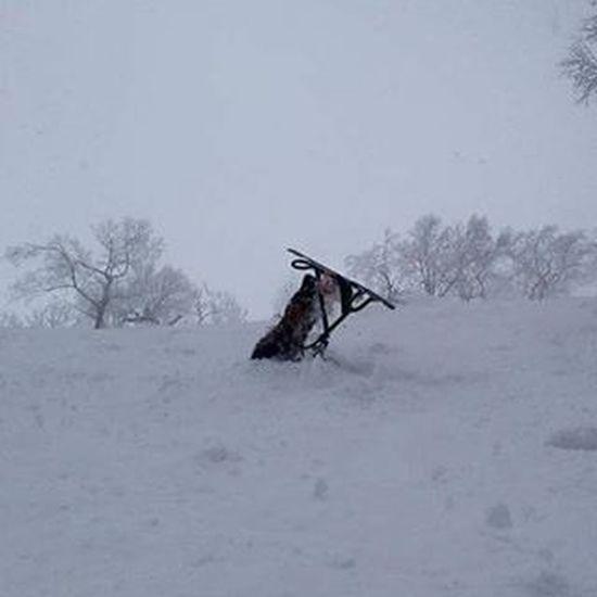 旭岳で埋まりました。 まるで犬神家の再現です(笑) 死ぬかと思った(T_T) 旭岳ロープウェイ スノースクート 犬神家ノ一族