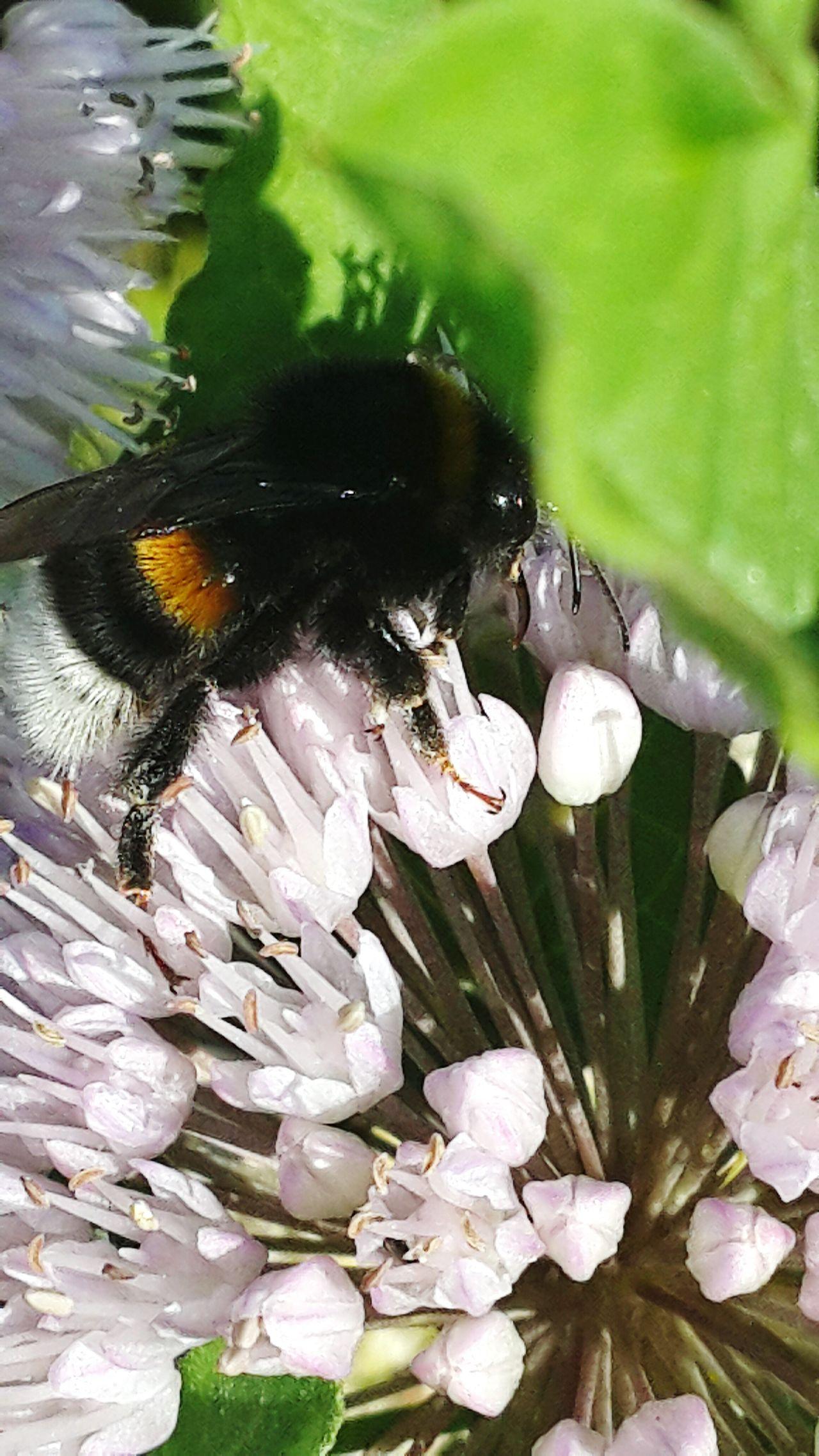 Bee And Flower шмель цветы