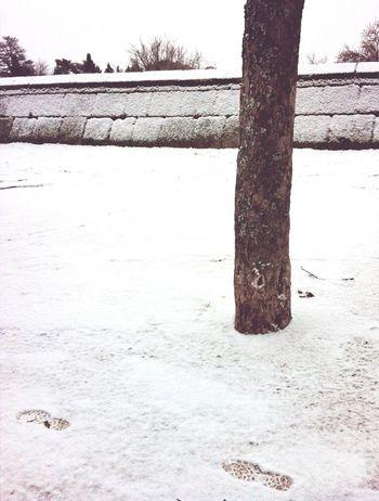 Snow Shootermag EyeEmBestPics Eye4photography AMPt_community