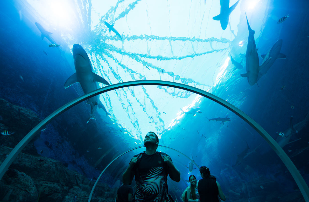 Beautiful stock photos of hai, fish, underwater, large group of animals, undersea