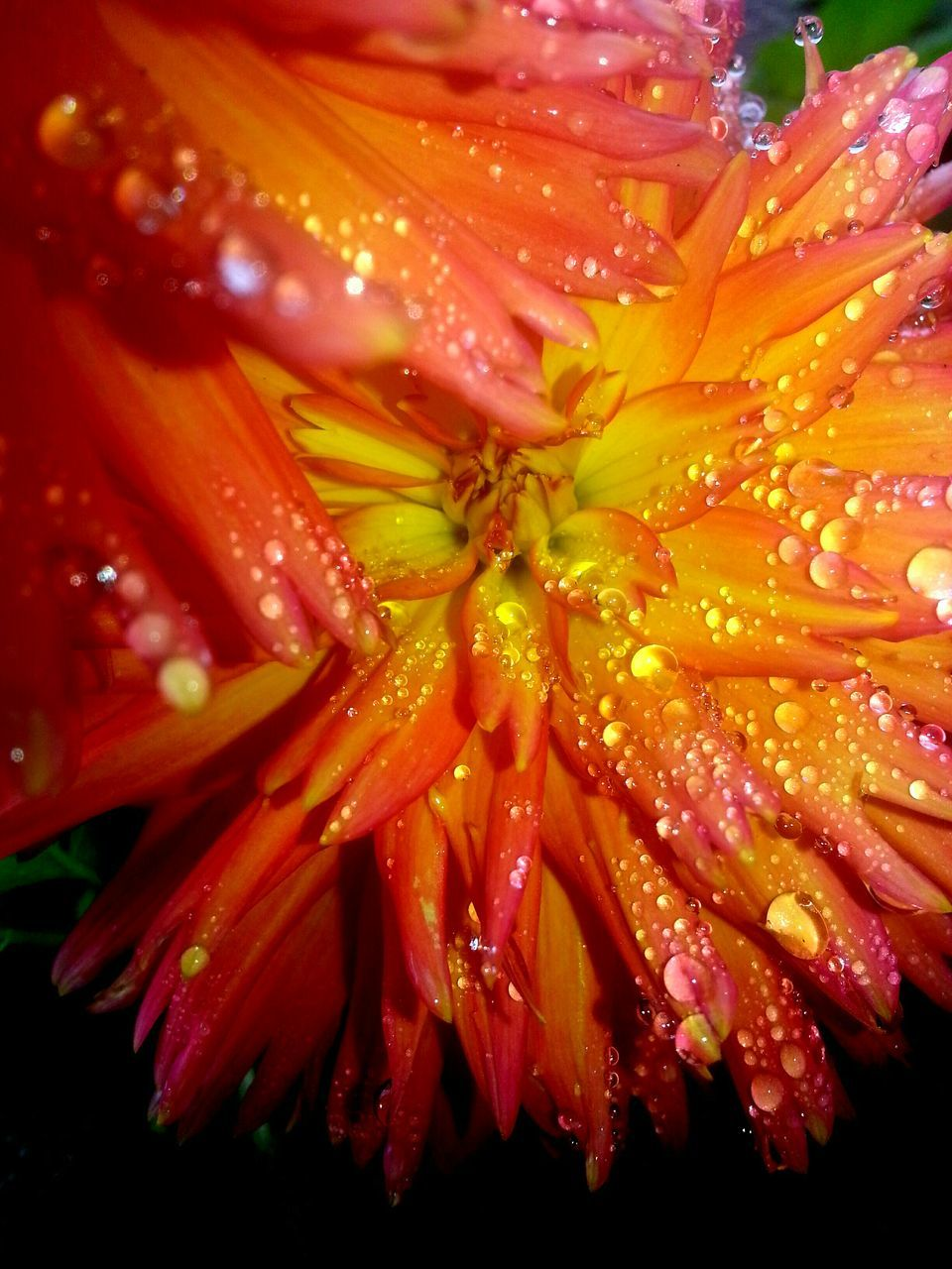 Extreme Close Up Of Water Drops On Flower