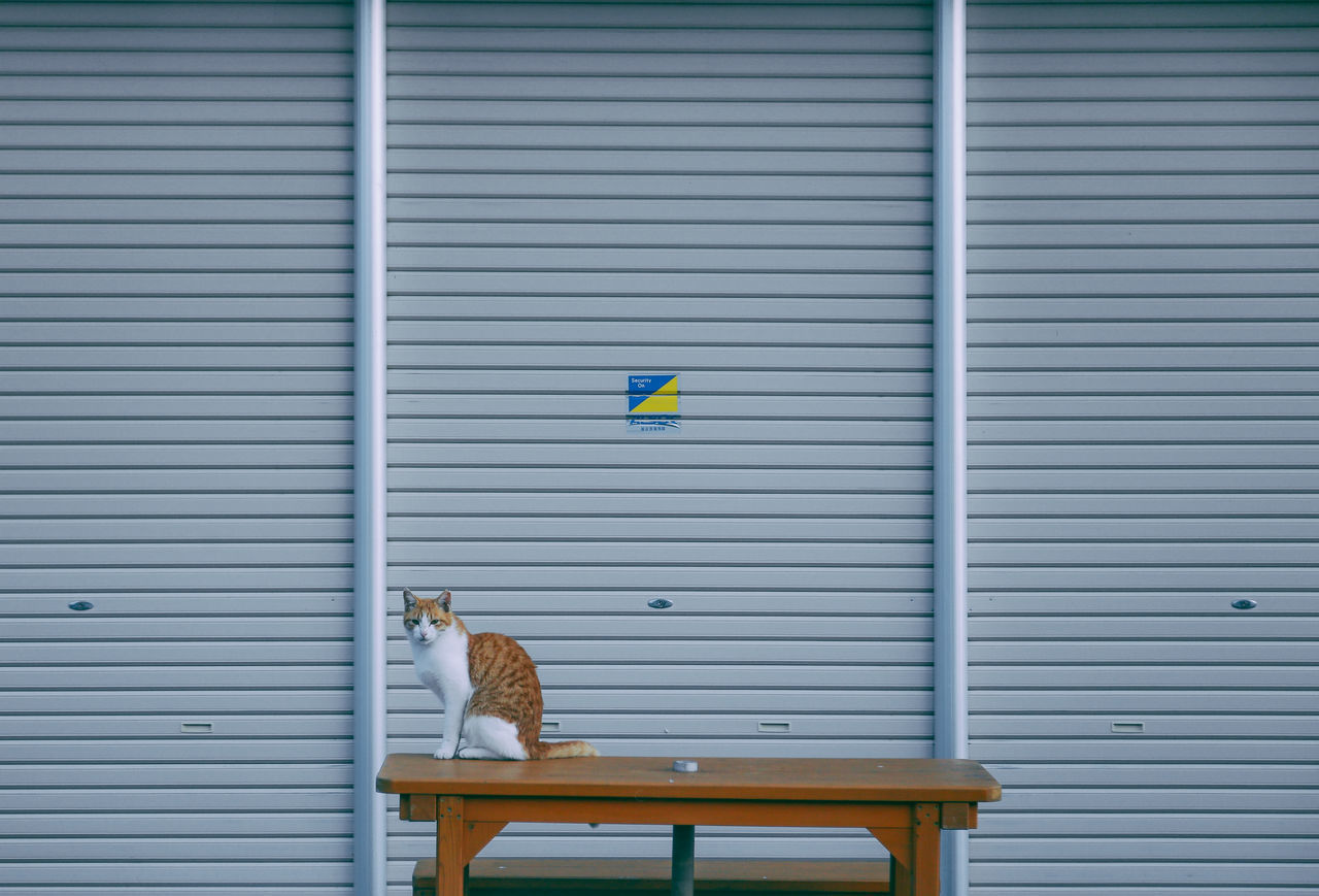 Animal Themes Blinds Cat Cats Of EyeEm Close-up Corrugated Iron Day Domestic Animals Domestic Cat Feline Japan Lines Lines And Shapes Mammal Minimalism Monochrome No People One Animal Outdoors Pets Pose Serious Shutter Streetphotography Ultimate Japan