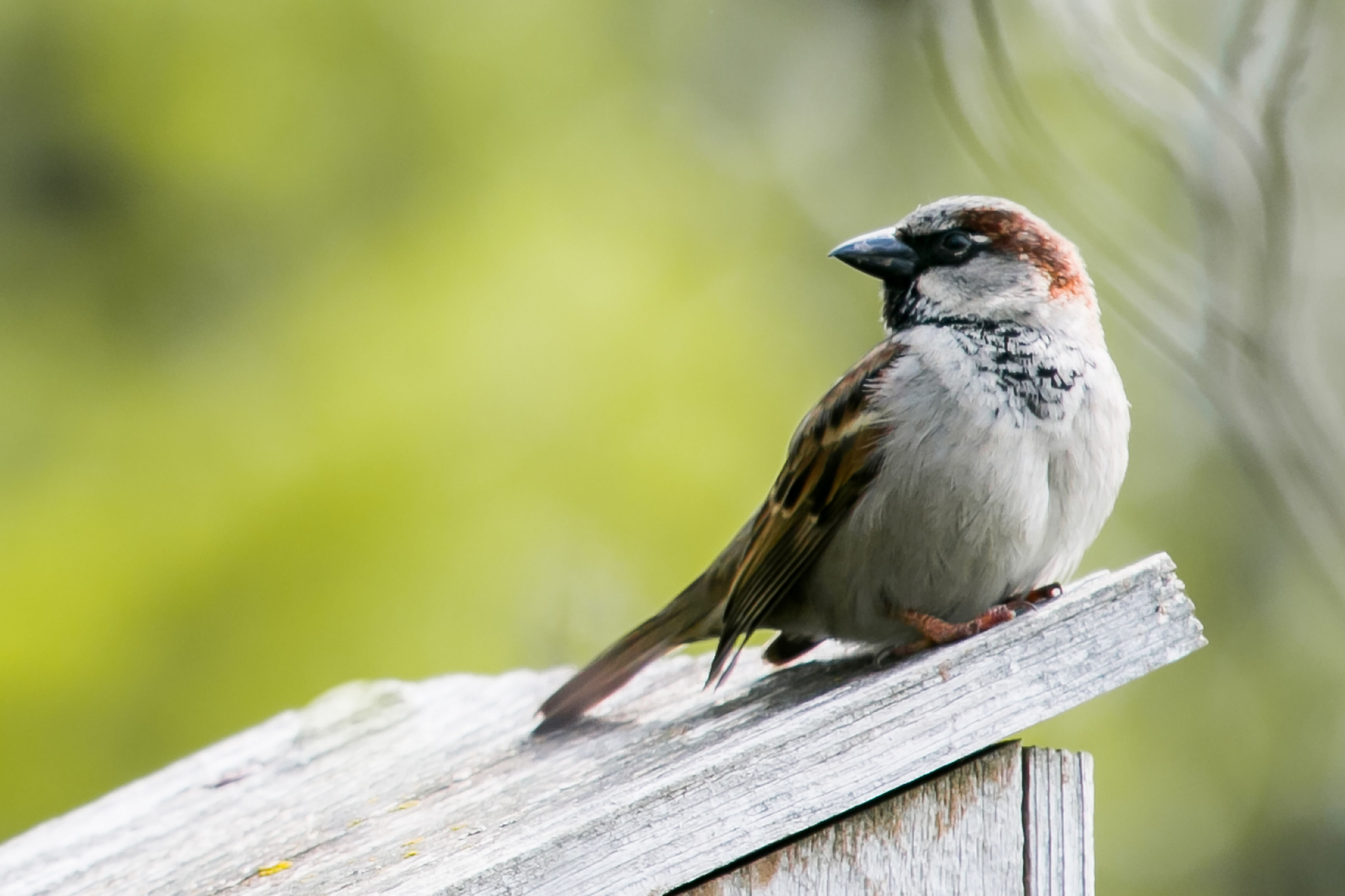 animals in the wild, bird, animal themes, wildlife, perching, one animal, focus on foreground, close-up, wooden, zoology, wood - material, full length, plank, beak, nature, selective focus, day, tranquility, beauty in nature, avian, no people