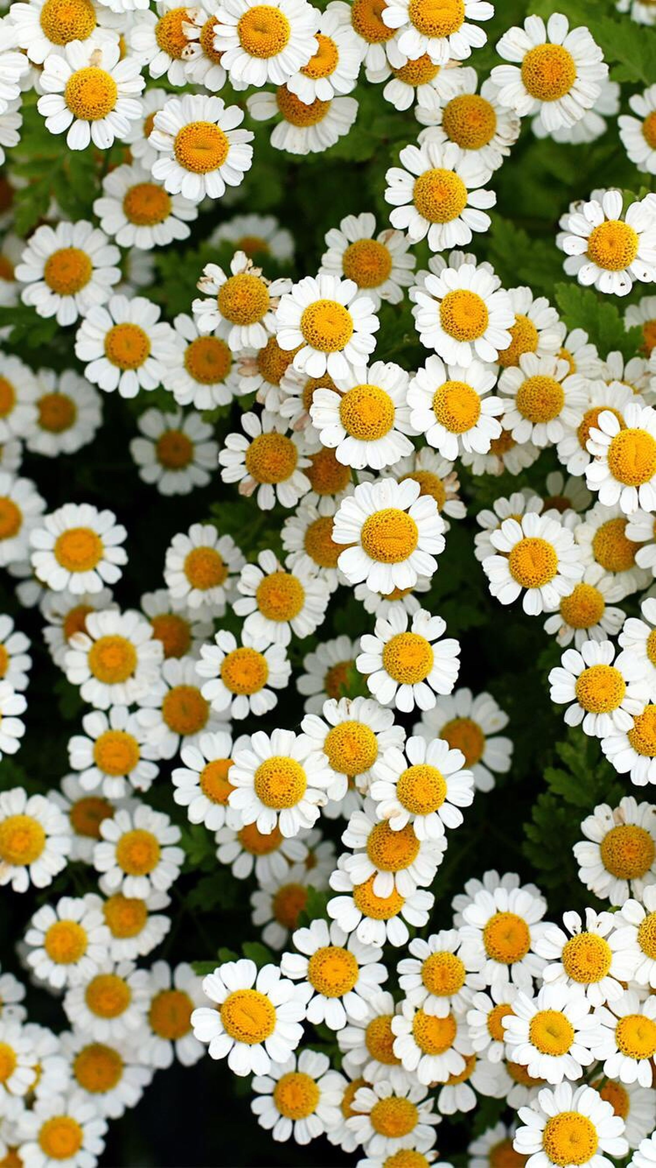 flower, freshness, yellow, fragility, petal, nature, beauty in nature, growth, flower head, plant, no people, backgrounds, close-up, outdoors, day