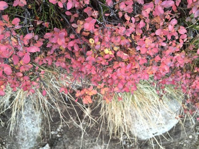 Top Perspective From My Point Of View Outdoors Grass Plants Outdoor Photography Plant Nature IPhone Nopeople Copy Space IPhoneography Travel Exploring Autumn Autumn Colors
