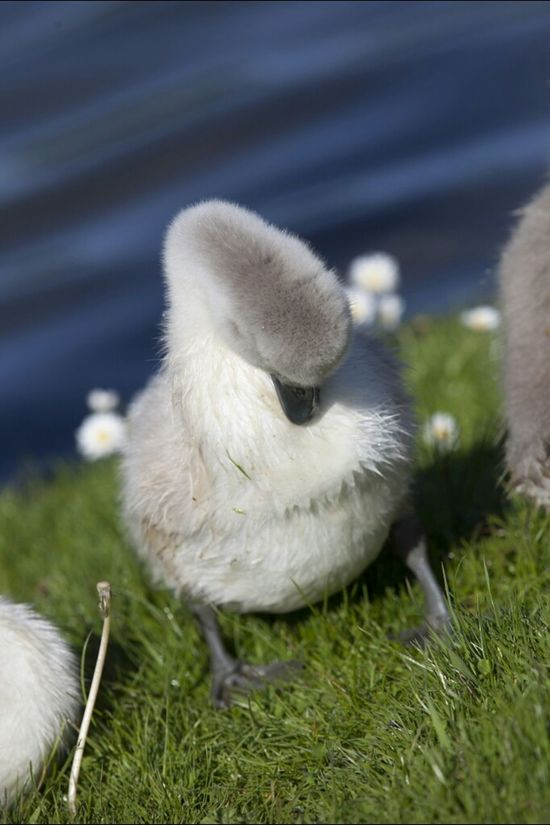 From last spring, I wanted to steal it. ITS SO FLUFFY!! Beautiful Cute Simplicity Eye4photography