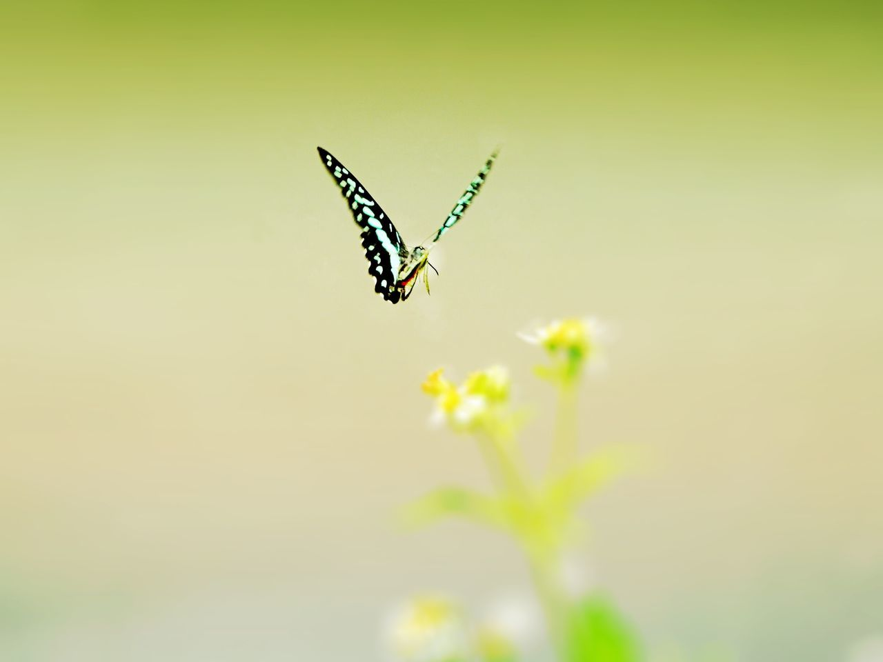 Close-Up Of Butterfly Hovering Over Flower
