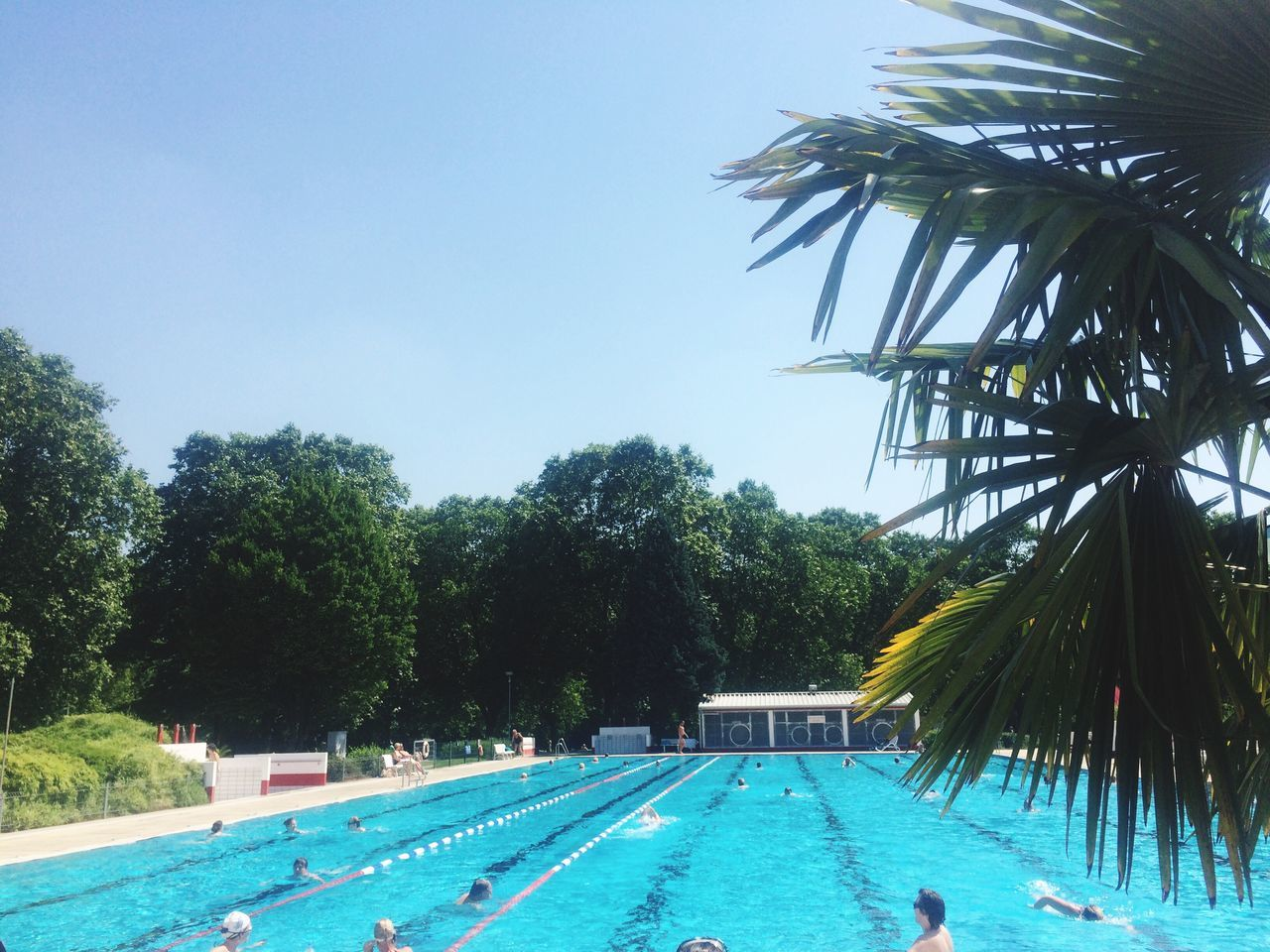 swimming pool, water, tree, palm tree, day, water park, outdoors, swimming, swimming lane marker, blue, nature, vacations, leisure activity, growth, real people, water slide, clear sky, sky, men, beauty in nature, one person, people