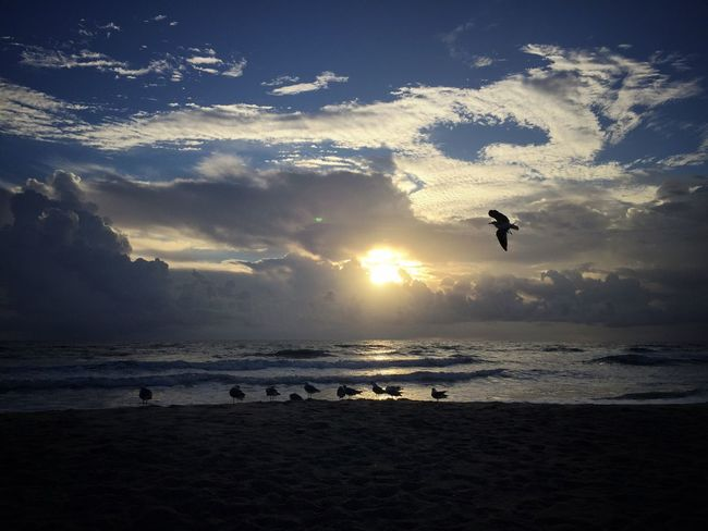 Sunrise, storm clouds & seagulls Sunrise_Collection Sunrise Silhouette Sunrise And Clouds Melbourne Beach, FL Horizon Over Water Beach Birds Oceanscape Silhouette Shore Birds Seagulls Beach Animals In The Wild Flying Cloud - Sky Storm Clouds