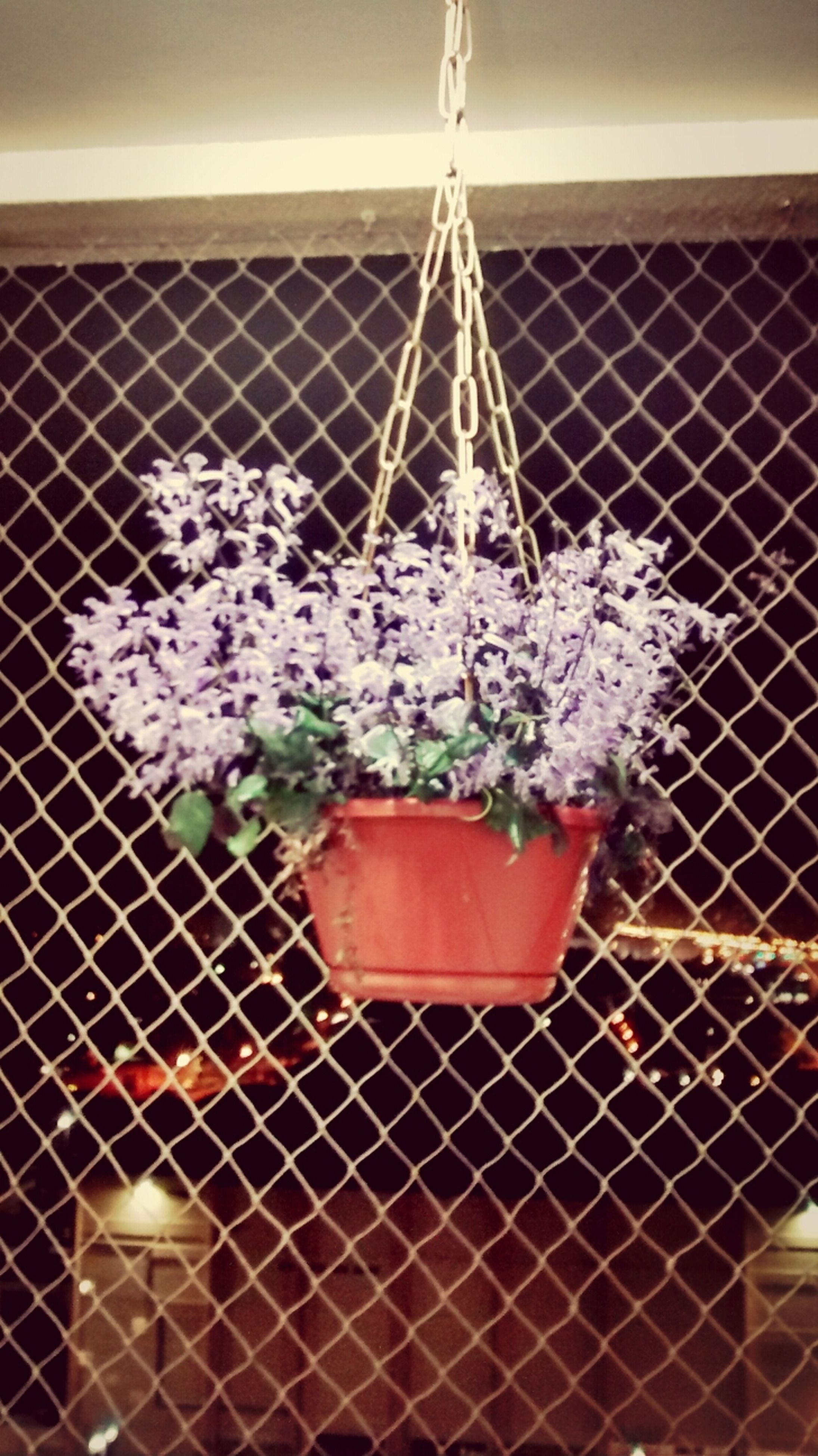 flower, fence, metal, chainlink fence, protection, safety, plant, security, close-up, growth, no people, wall - building feature, outdoors, fragility, day, nature, built structure, focus on foreground, potted plant, metallic