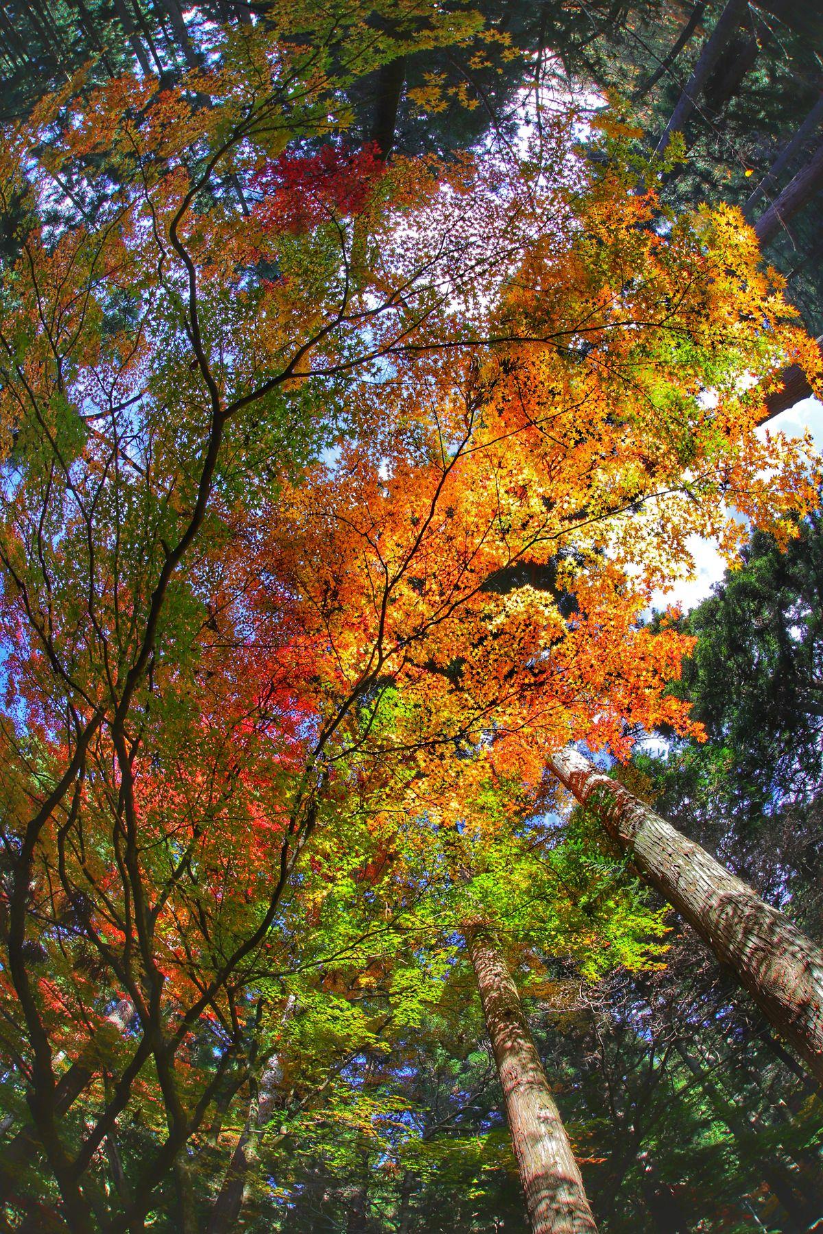いよいよ寒いっス😱でも金曜日ファイト👍 Tree Growth Nature Beauty In Nature Day Low Angle View No People Outdoors Leaf Multi Colored Full Frame Autumn Branch Close-up Sky 紅葉 一目惚れんず