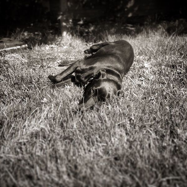 One Animal Animal Themes Grass Mammal Animals In The Wild Field Nature No People Day Domestic Animals Outdoors Close-up