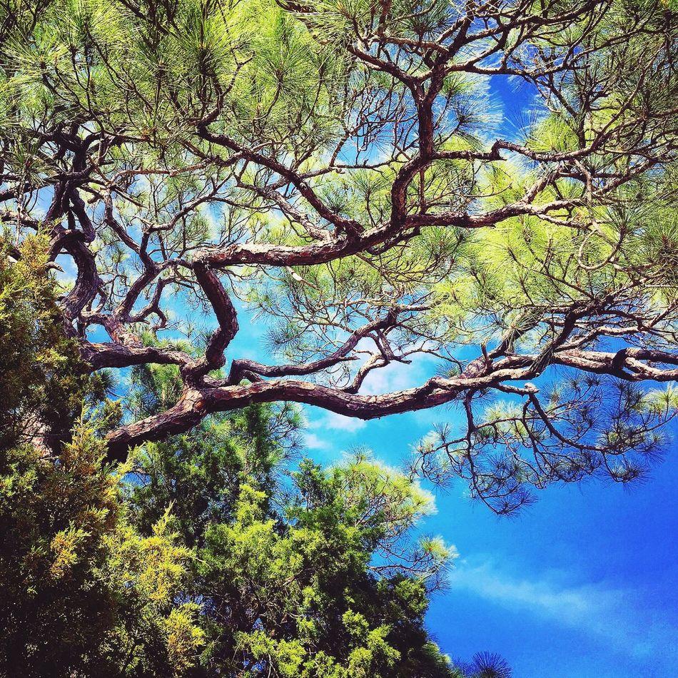 Hug A Tree Evergreen Pines Sunshine State Gulf Coast Gulf Florida Wildlife Preserve Coastal Walk
