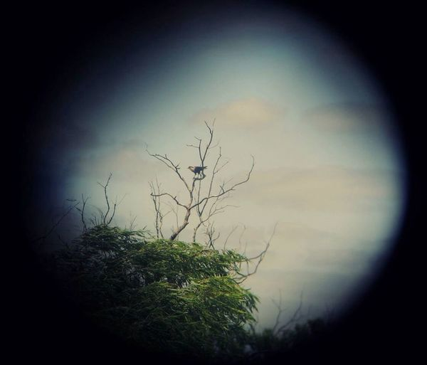 Photography Crestedcaracara Bird Tree