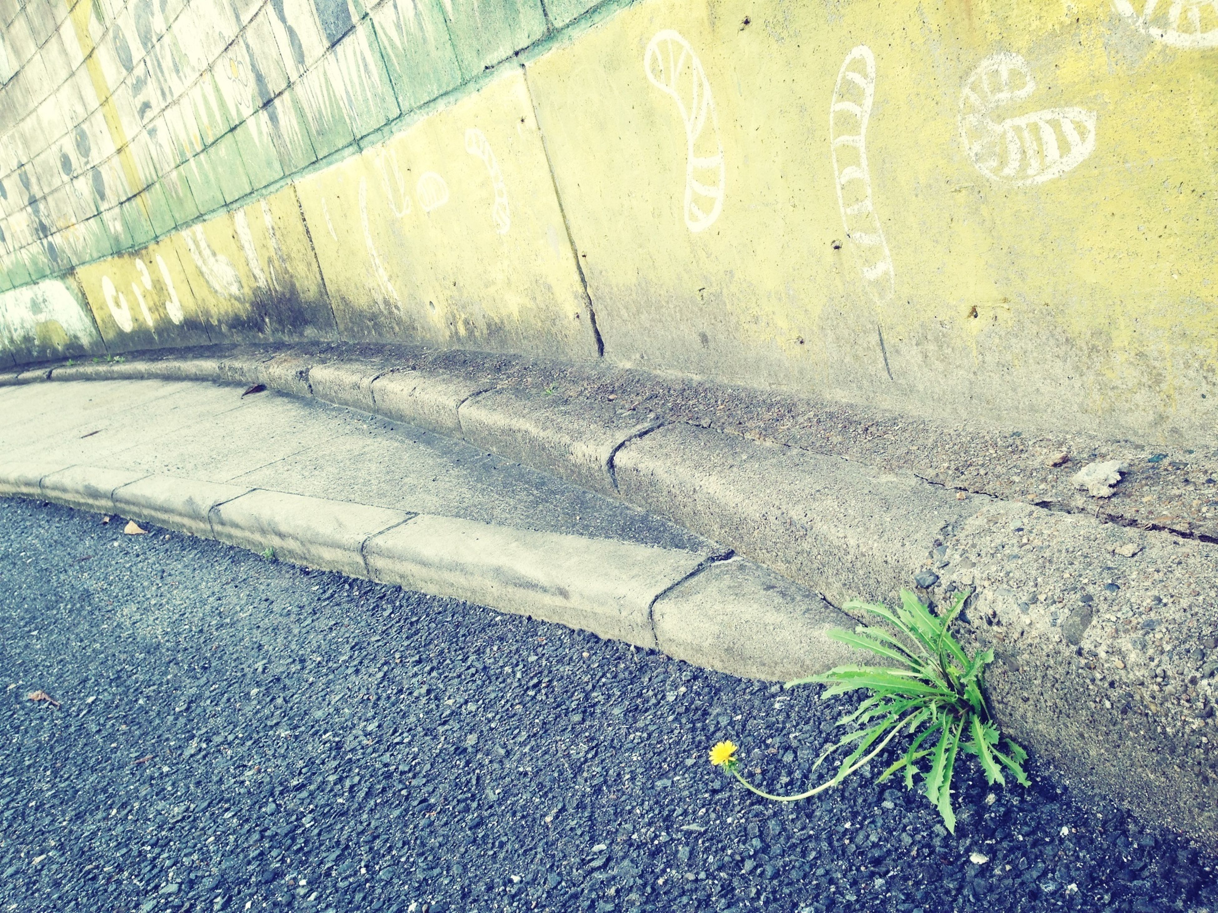 text, street, western script, wall - building feature, high angle view, communication, textured, sidewalk, day, no people, outdoors, road, plant, asphalt, close-up, wall, leaf, sunlight, cobblestone, footpath