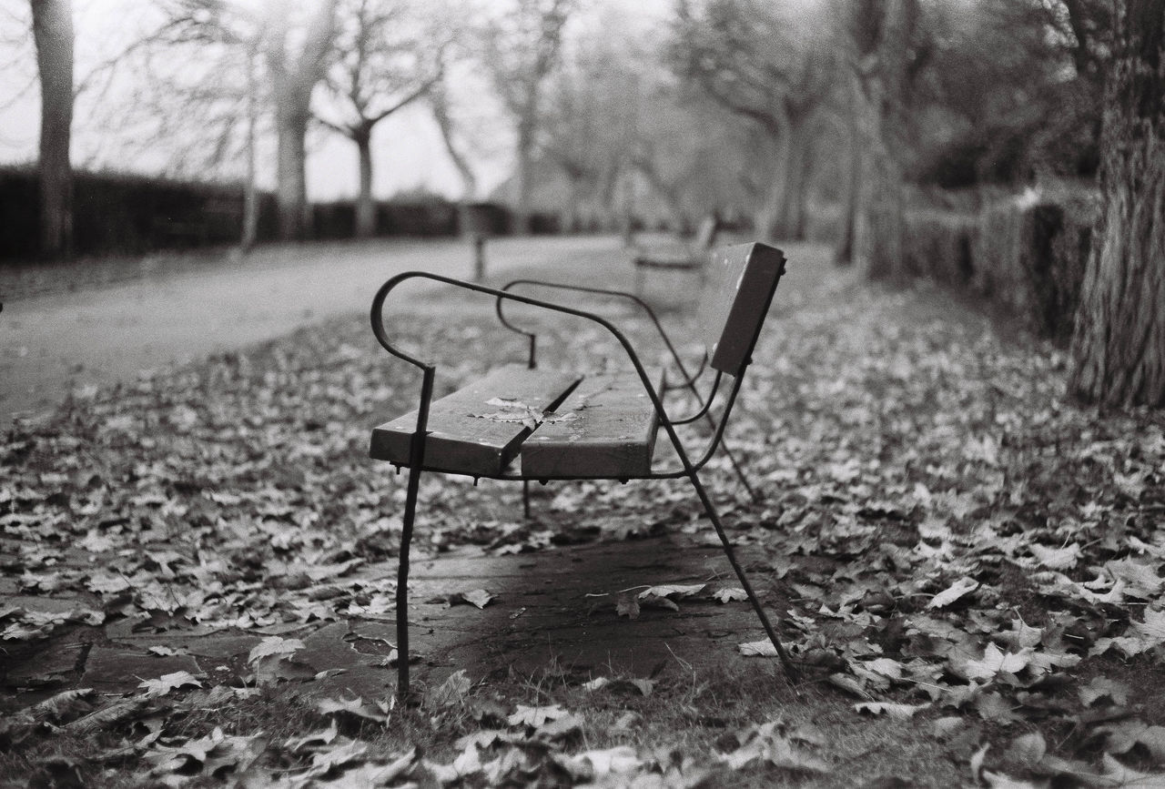 Missing Park Absence Empty Bench Bare Tree Leaves Blackandwhite Monochrome Leica M7 Ilford FP4 Plus Film 35mm Film Photography The Film Files