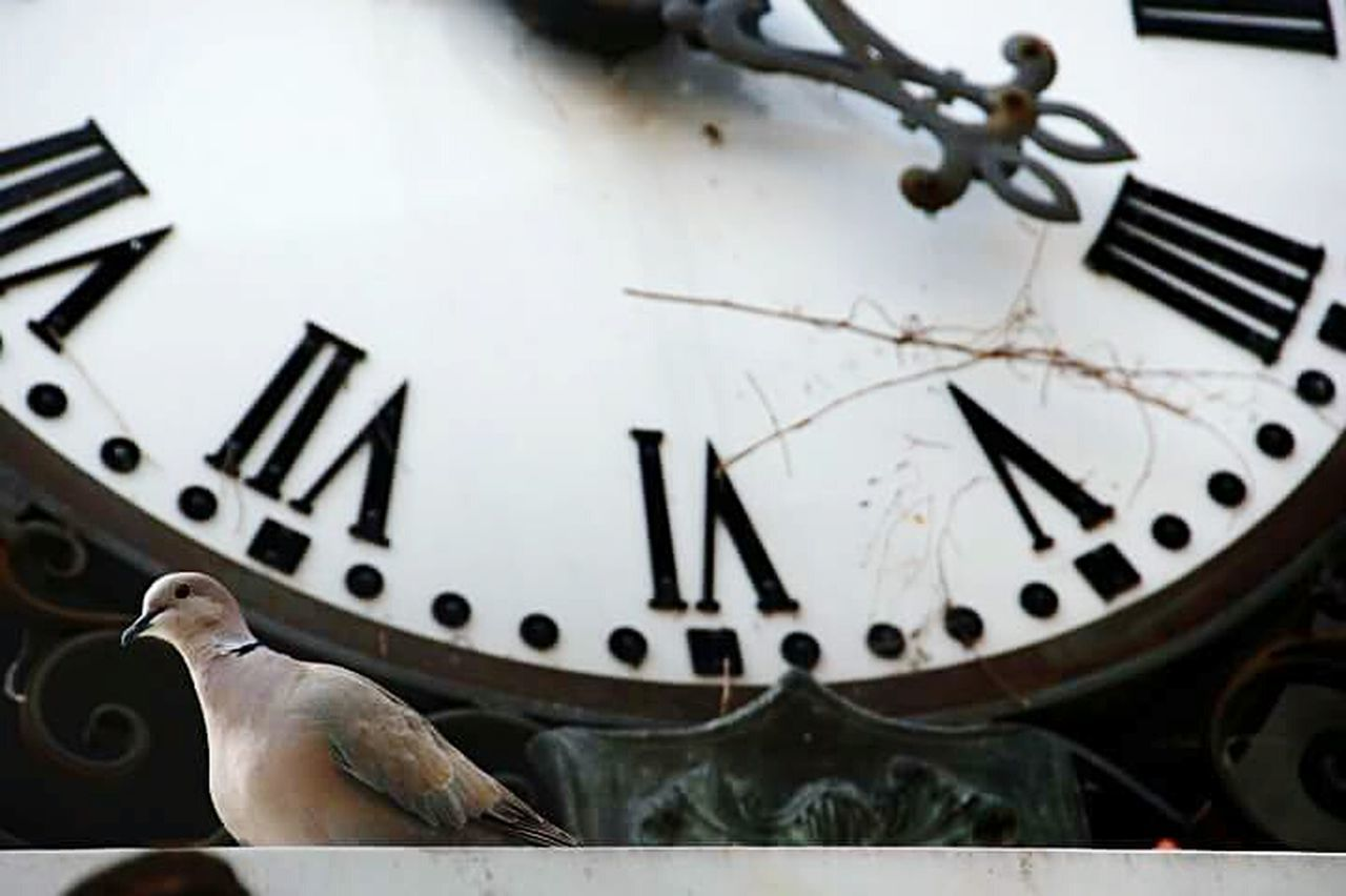 time, clock, old-fashioned, clock face, minute hand, hour hand, roman numeral, no people, close-up, day