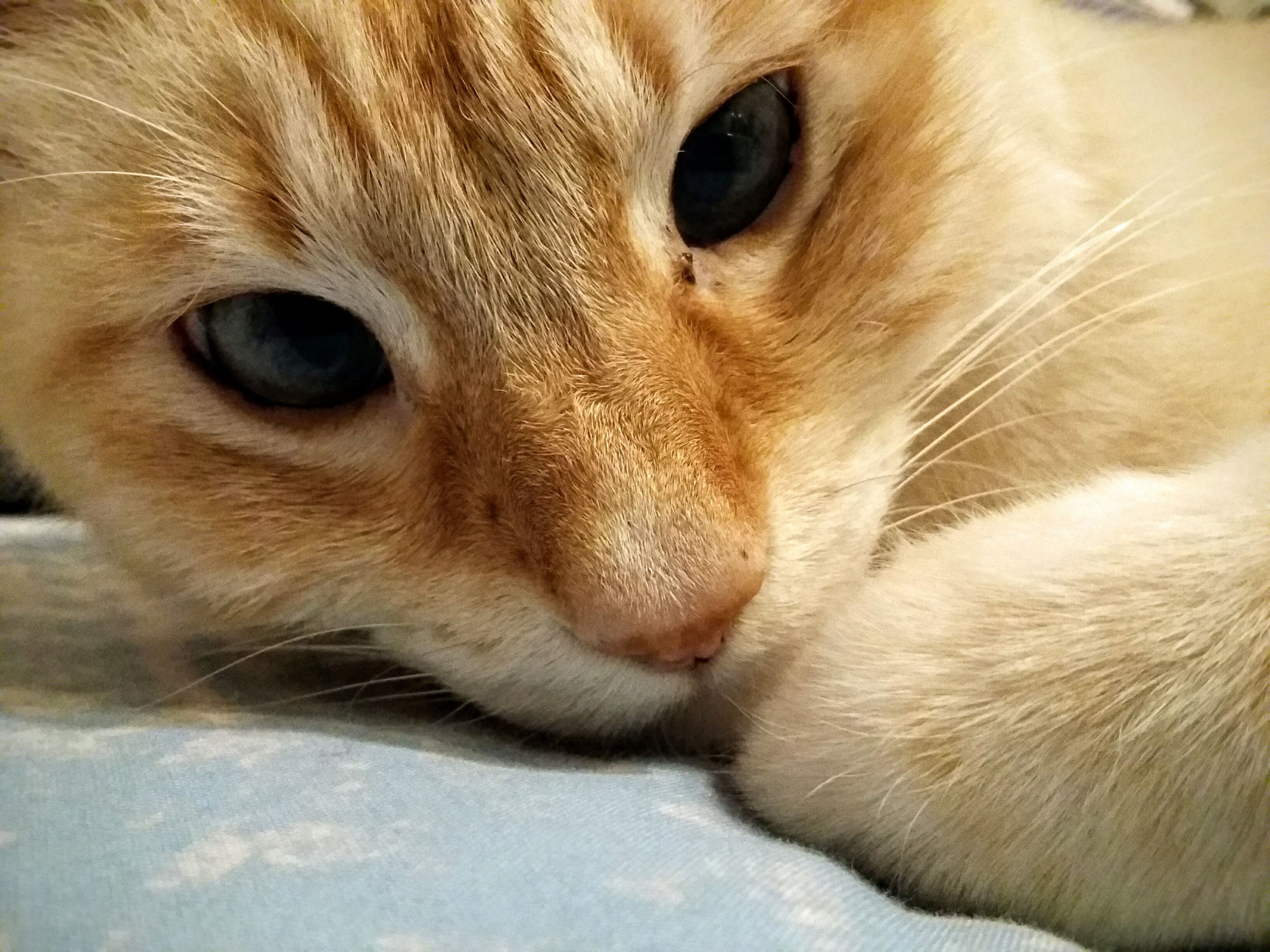 close-up, looking at camera, one animal, portrait, pets, mammal, domestic animals, no people, animal themes, full frame, indoors, nature, day