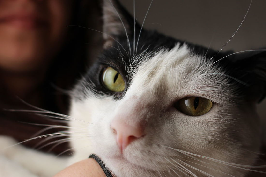 Alertness Animal Animal Body Part Animal Eye Animal Head  Cat Close-up Curiosity Domestic Animals Domestic Cat Feline Focus On Foreground Mammal No People Part Of Pets Portrait Selective Focus Snout Staring Whisker