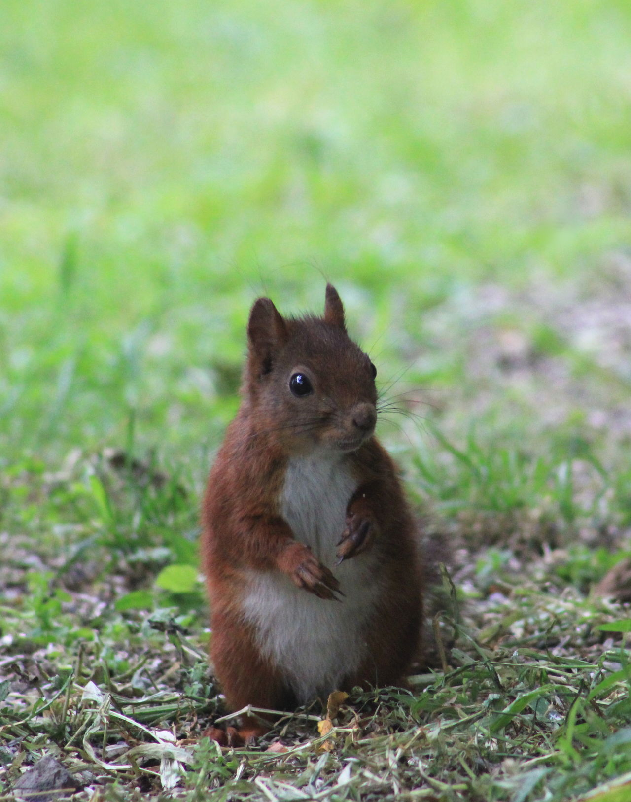 Beautiful stock photos of squirrel, Animal, Animal Themes, Animals In The Wild, Close-Up