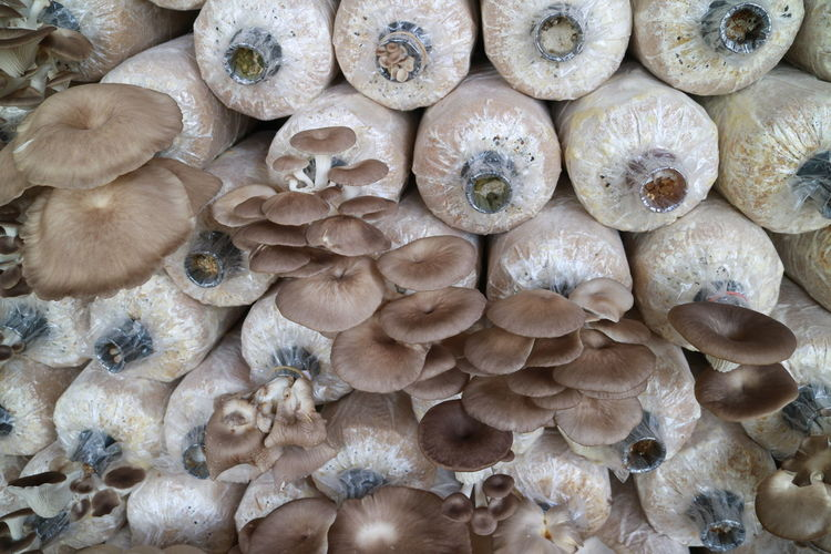 Full Frame Backgrounds Large Group Of Objects Abundance No People Textured  Seashell Day Mushroom Close-up Outdoors Fungus Nature Toadstool Angle Mushroom