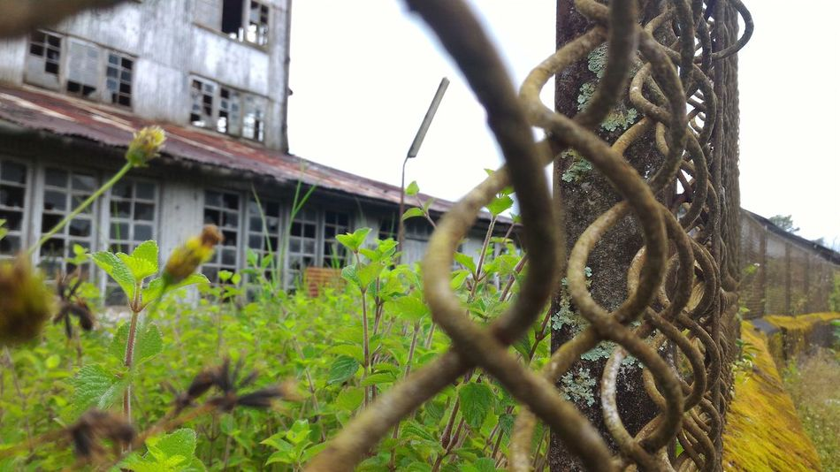 Architecture Built Structure Close-up Plant Growth Building Exterior Stem Focus On Foreground Nature Fragility No People Outdoors Growing Spiked Factory Overgrown Abandoned