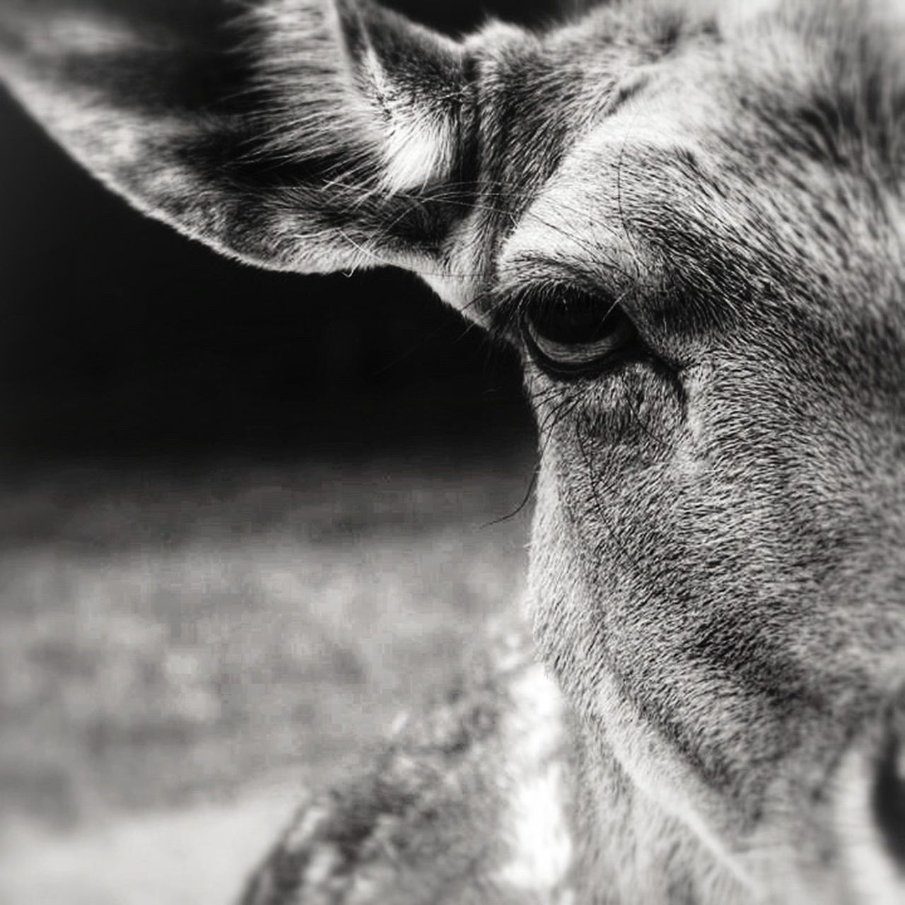 """""""The souls of many others have touched my soul, and not all were other people."""" ~ A.D. Williams ❤️ EyeEm Nature Lover EyeEm Best Shots EyeEm Canon Streamzoofamily Tadaa Community The EyeEm Facebook Cover Challenge Beingaware EyeEm Best Shots - Black + White Bnw"""
