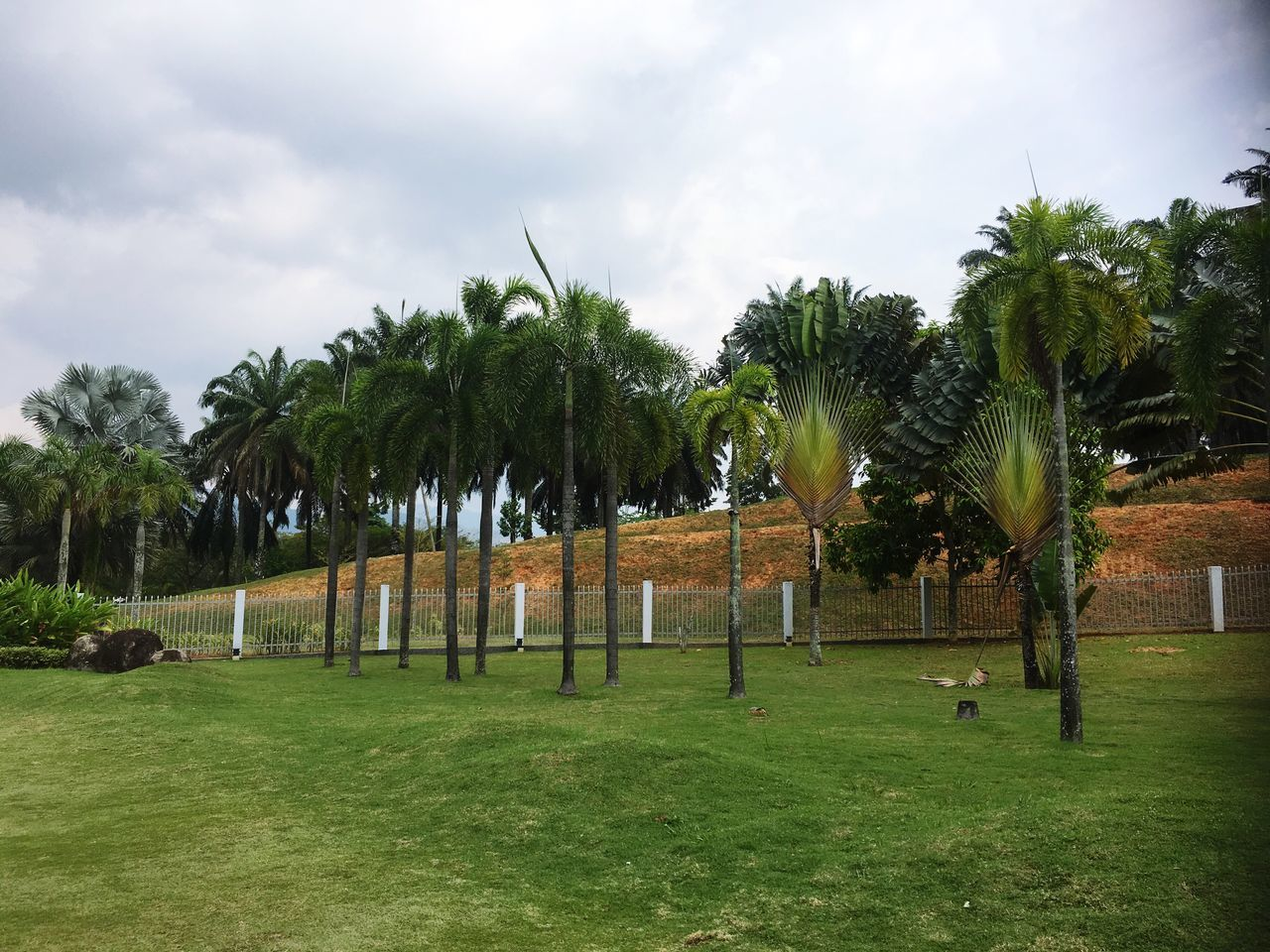 tree, grass, sky, green color, growth, palm tree, cloud - sky, field, nature, day, outdoors, landscape, no people, beauty in nature
