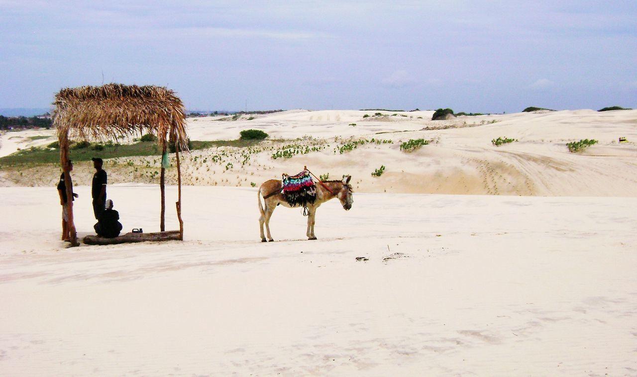 Donkey Dunes Brazil Jericoacoara Silhouette Sun Daylight