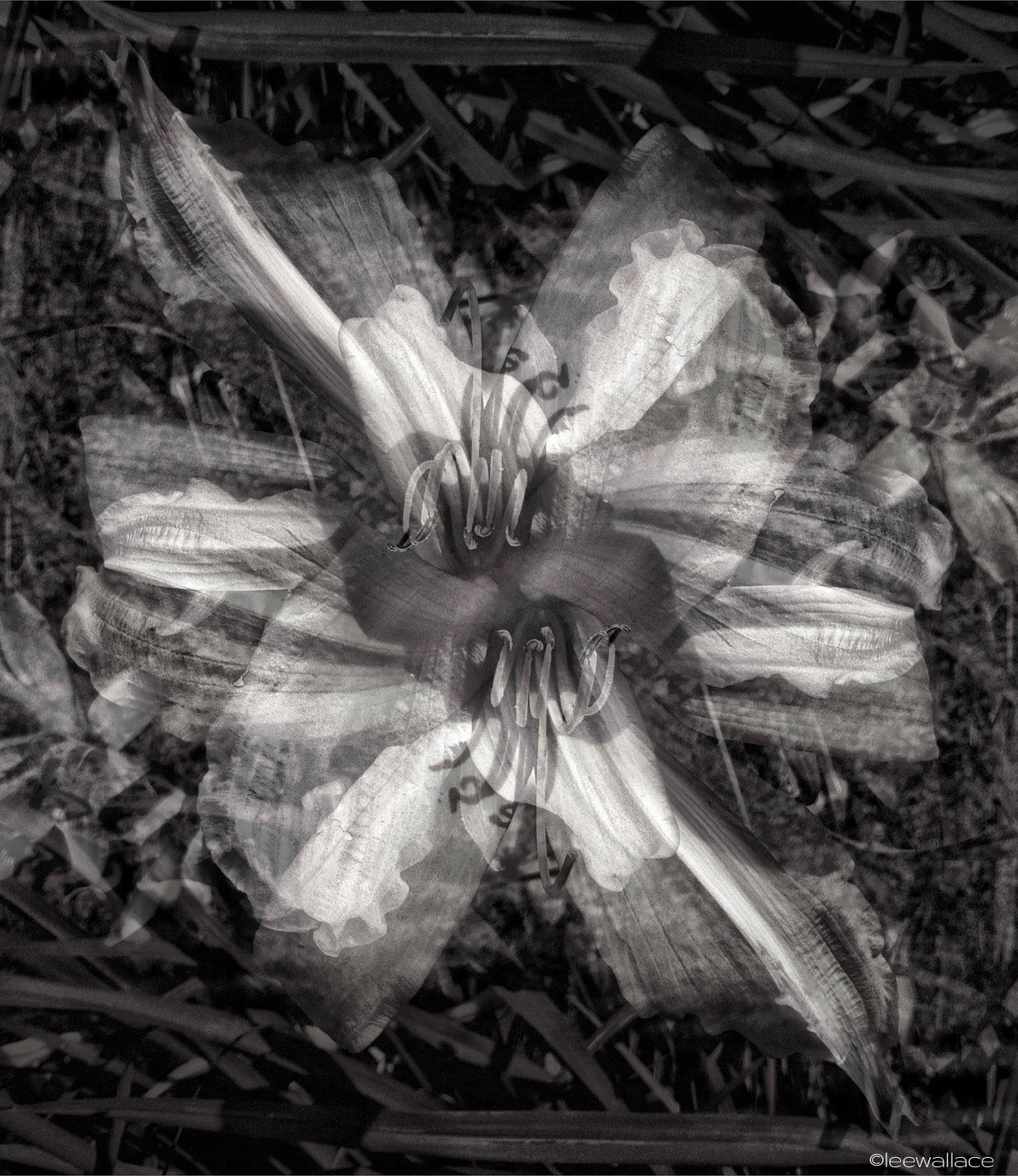 Flowers Blackandwhite Blender Flowerporn